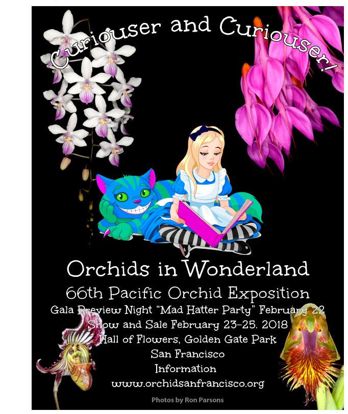 Orchids in Wonderland