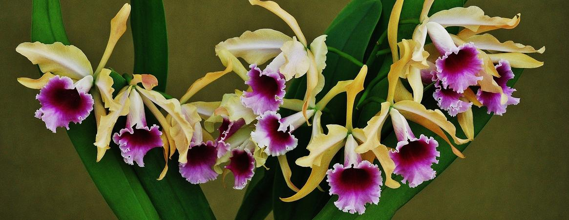 <b>Southeastern Pennsylvania Orchid Society</b><br/>  2018 Show & Sale <br/> April 6th - 8th<br/>