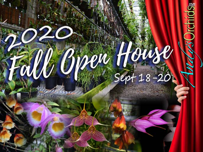 <div  style=` text-align:center;margin; auto;`><span style=`font-size:24.0pt; color: orange; font-weight: bold; text-align:center`>Andy`s Orchids<br /> 2020 Summer Open House</span><br/><span style=`font-size:12.0pt; color: #0066ff; font-weight: bold; text-align:center`>June 19th-21st<br/>10am-4pm</span><br/><span  style=`font-size:14.0pt; color: #6ec9c0; font-weight: bold; text-align:center;text-shadow: 2px 2px 8px yellow;`>Rare and Exotic beautifully  mounted and potted orchids is What We Do Best. </span><br/><span  style=`font-size:14.0pt; color: black; text-align:center;`>Come Visit a One Of A Kind Nursery. Over 7000 species amongst 700,000+ plants to choose from.</span></div><br/>