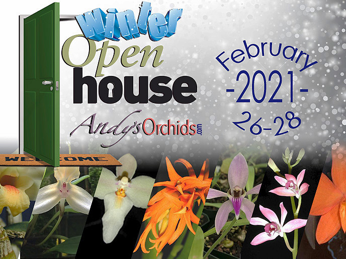 Andys Orchids Winter Open House