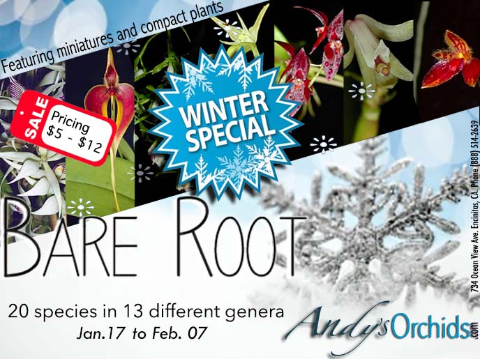 Bare Root Winter Special