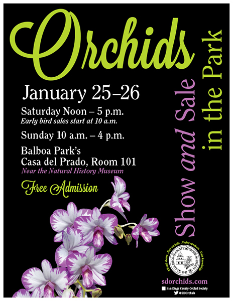 Winter Orchids In The Park
