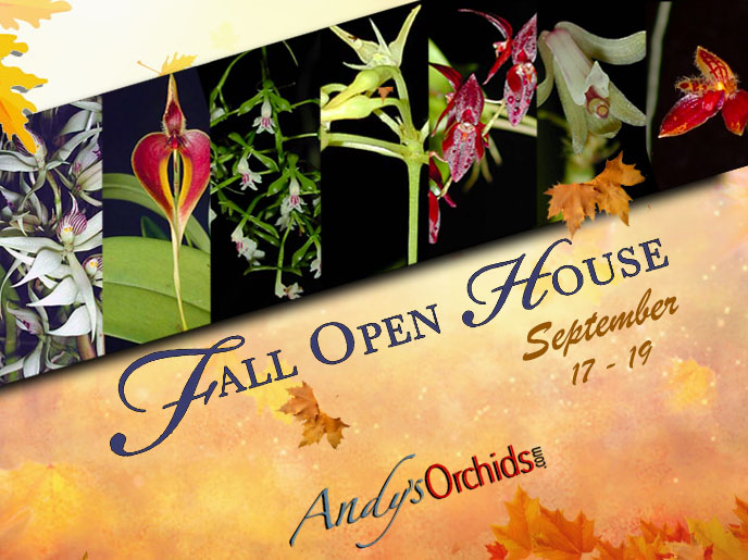<div  style=` text-align:center;`> <span style=`font-size:24.0pt; color: orange; font-weight: bold; text-align:center;`>Andy`s Orchids<br />2021 Fall Open House</span><br/> <span style=`font-size:12.0pt; color: #0066ff; font-weight: bold; text-align:center;`>Sept 17th- 19th<br/>10am-4pm</span><br/> <span  style=`font-size:14.0pt; color: #6ec9c0; font-weight: bold; text-align:center;text-shadow: 2px 2px 8px yellow;`>Rare and Exotic beautifully mounted and potted orchids is What We Do Best. </span><br/> <span  style=`font-size:14.0pt; color: black; text-align:center;`>Come Visit Our One Of A Kind Nursery. Over 7000 species amongst 700,000+ plants to choose from.</span> </div><br/>