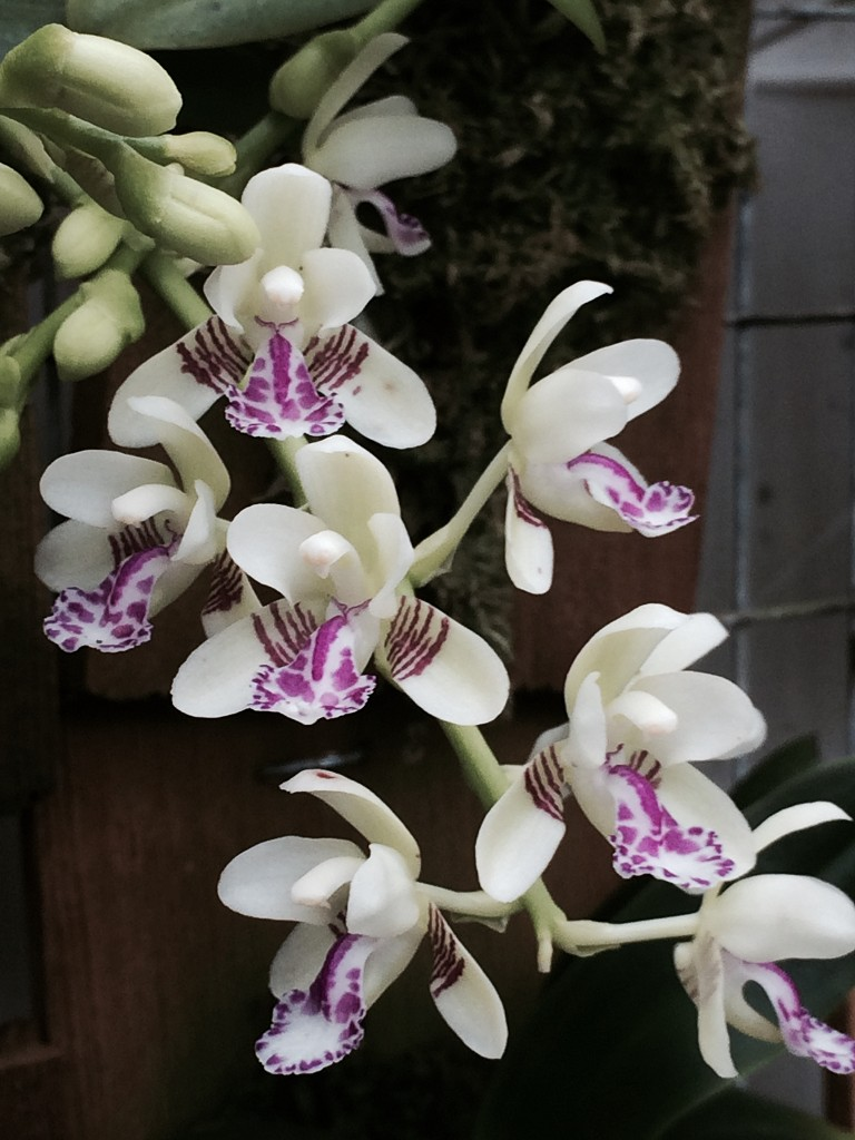 Orchid List